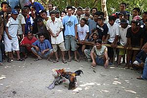 74168a Cestopis po Indonésii 2007