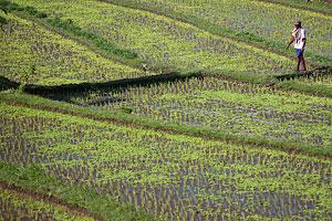 75690a Cestopis po Indonésii 2007