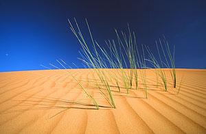 18740014a Omán a Spojené arabské emiráty 2007