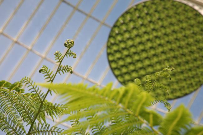 14 Botanická zahrada Glasgow