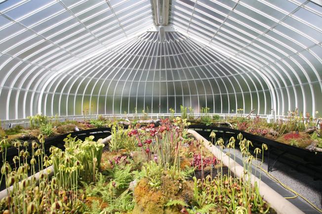 18 Botanická zahrada Glasgow