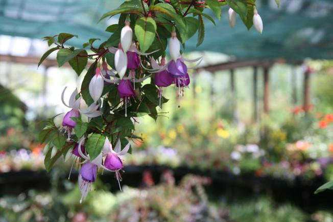 20 Botanická zahrada Glasgow