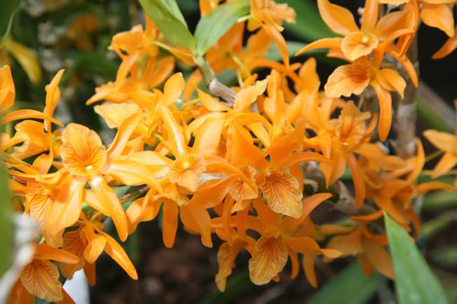 29 Botanická zahrada Glasgow