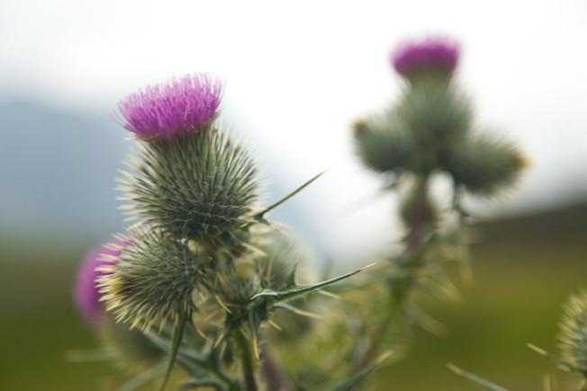 glencoe skotsko scotland 15 Glencoe, Skotsko