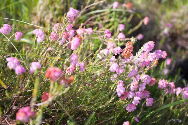 glencoe skotsko scotland 35 Glencoe, Skotsko