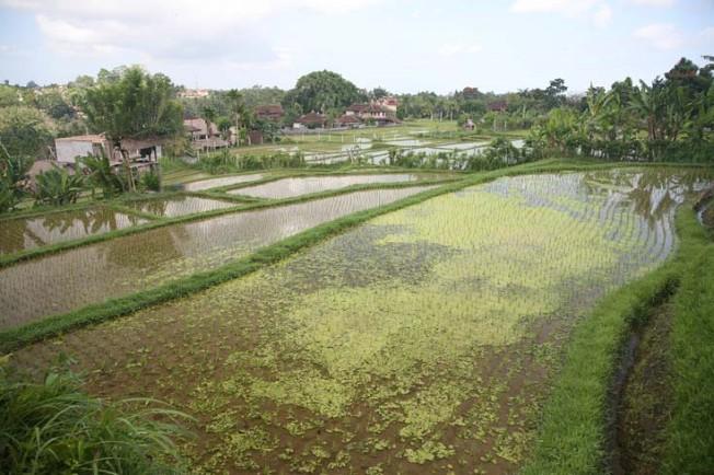 indonesie 4 Indonésie