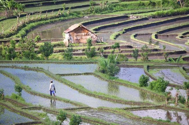 indonesie 53 Indonésie