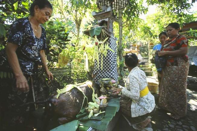indonesie bali kultura zvyky 23 Kultura a zvyky Indonésie