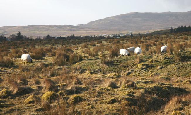 isle of skye skotsko scotland 8 Isle of Skye, Skotsko