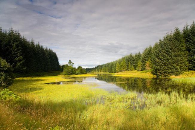 loch lomond skotsko scotland 33 Loch Lomond a The Trossachs NP,  Skotsko