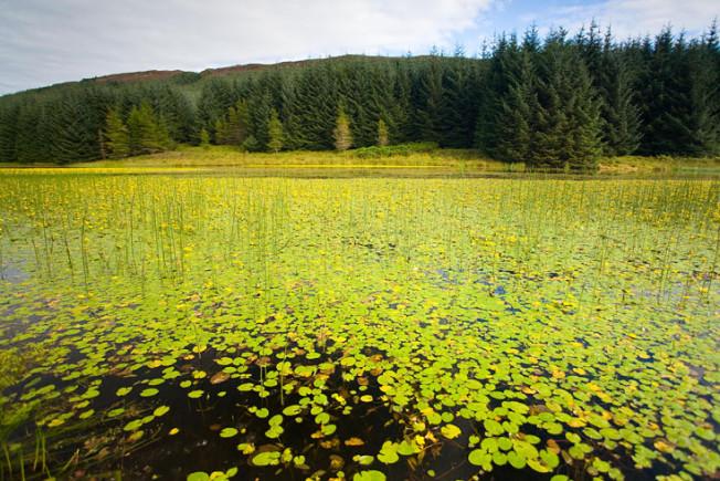 loch lomond skotsko scotland 34 Loch Lomond a The Trossachs NP,  Skotsko