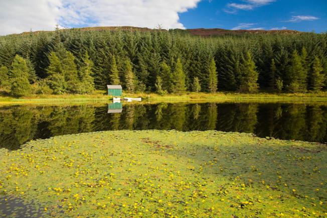 loch lomond skotsko scotland 37 Loch Lomond a The Trossachs NP,  Skotsko