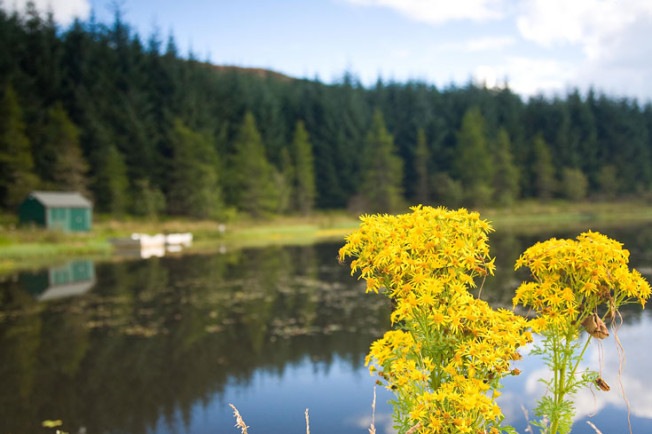 loch lomond skotsko scotland 41 Loch Lomond a The Trossachs NP,  Skotsko