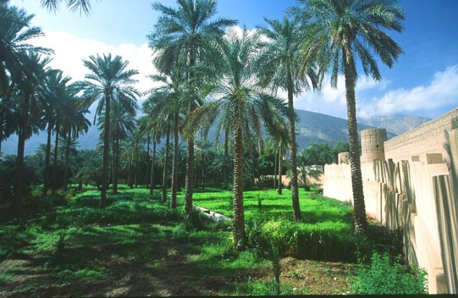 oman krajiny landscapes 20 Omán   krajiny