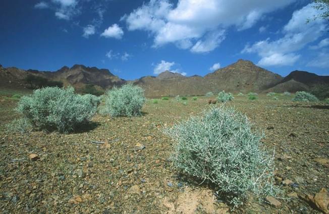 oman krajiny landscapes 23 Omán   krajiny