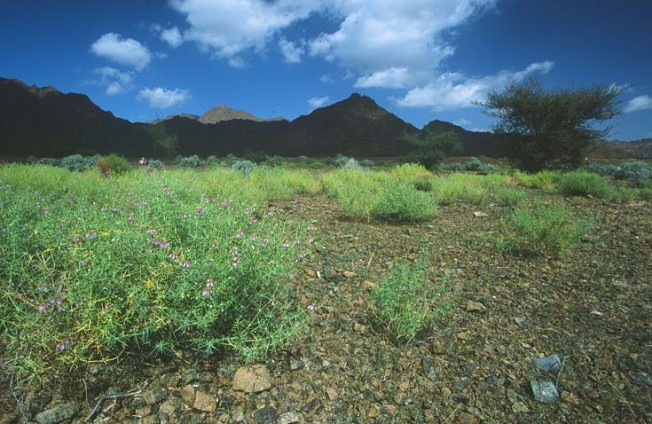 oman krajiny landscapes 24 Omán   krajiny