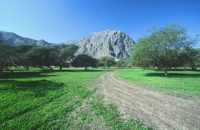 oman krajiny landscapes 25 Omán   krajiny
