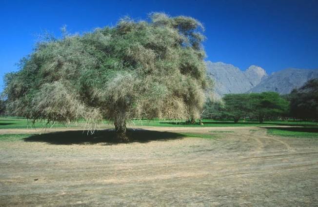 oman krajiny landscapes 26 Omán   krajiny