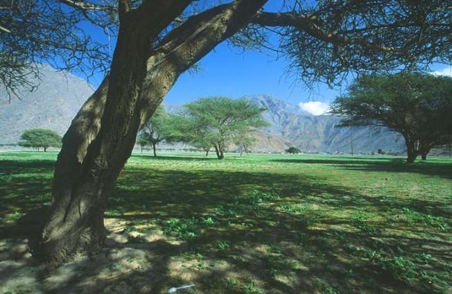 oman krajiny landscapes 28 Omán   krajiny