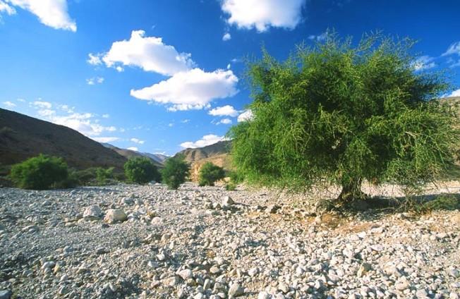 oman krajiny landscapes 29 Omán   krajiny