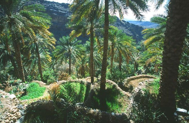 oman krajiny landscapes 6 Omán   krajiny