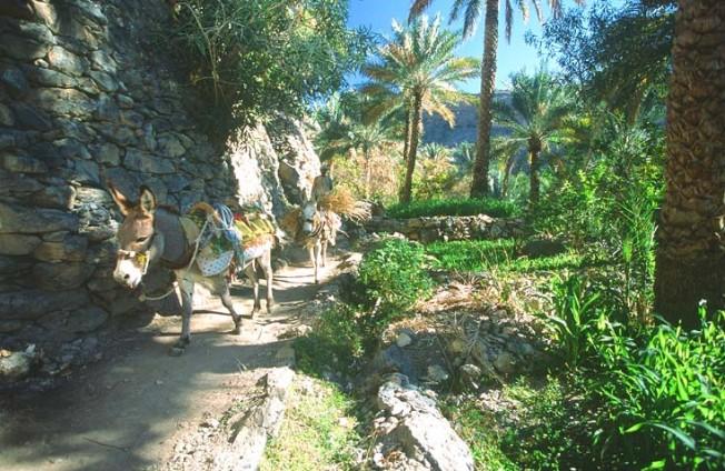 oman krajiny landscapes 7 Omán   krajiny