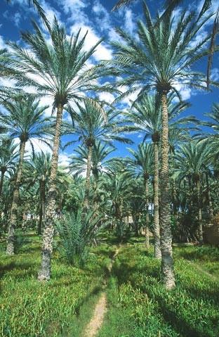 oman krajiny landscapes 9 Omán   krajiny