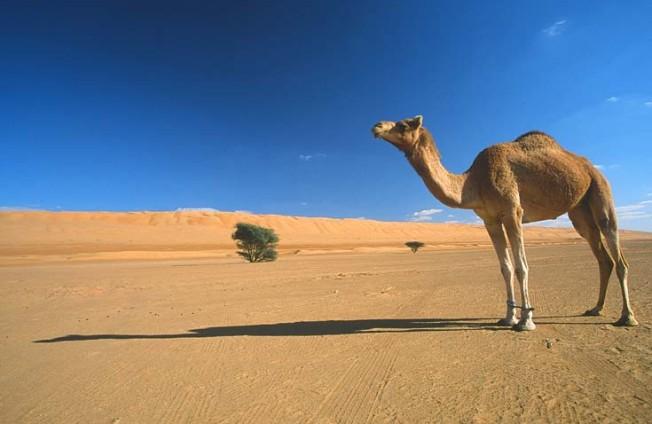 oman poust desert 6 Omán   poušť