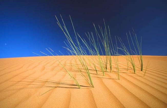 oman poust desert 9 Omán   poušť